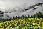 Набор для вышивания бисером -туман в горах