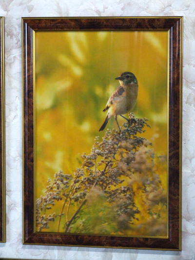 Фотокартина с птицей