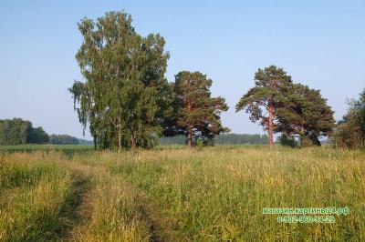 Фотография деревья в Русском поле