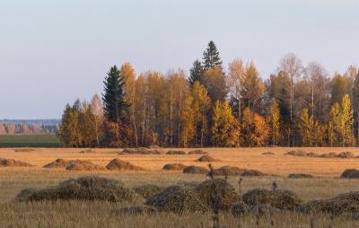 Фотография осенний пейзаж продам