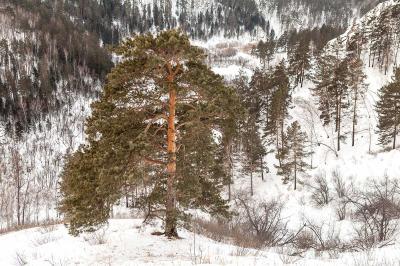 Фотография зимний пейзаж продам