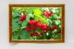 Фотокартина - Калина красная